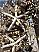 detail starfish