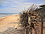 Seaside Driftwood Starfish