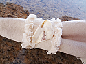 Oyster Shell Napkin Rings (4)